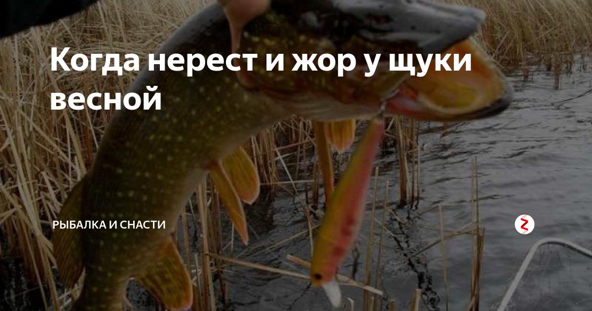 Когда весной начинает клевать щука: советы на все месяцы весенней рыбалки
