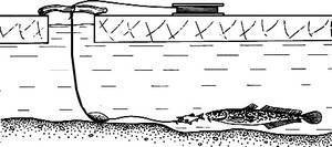 Перемет на налима: устройство снасти и способы ловли