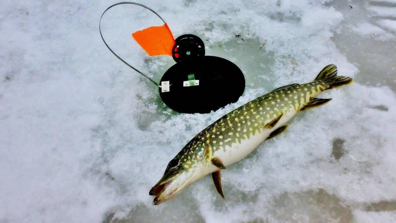 Ловля щуки на спиннинг - поиск, снасти, сезонные особенности