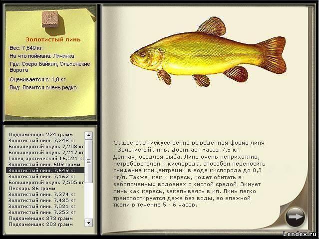 Рыба линь фото и описание, питание, где обитает