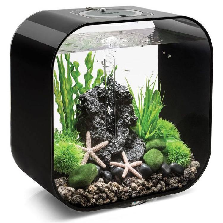 Аквариум без растений. как организовать стабильную среду?
