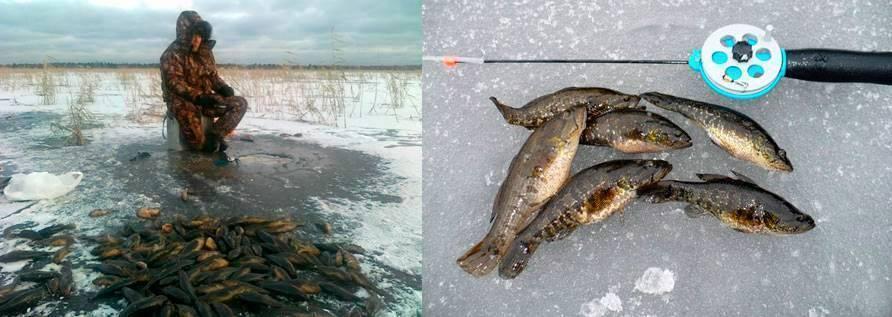 Ловля ротана в ноябре на спиннинг - читайте на сatcher.fish