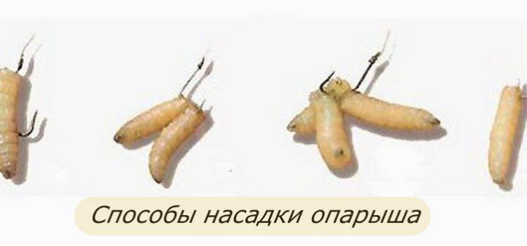 Как правильно насаживать червя на крючок — различные способы