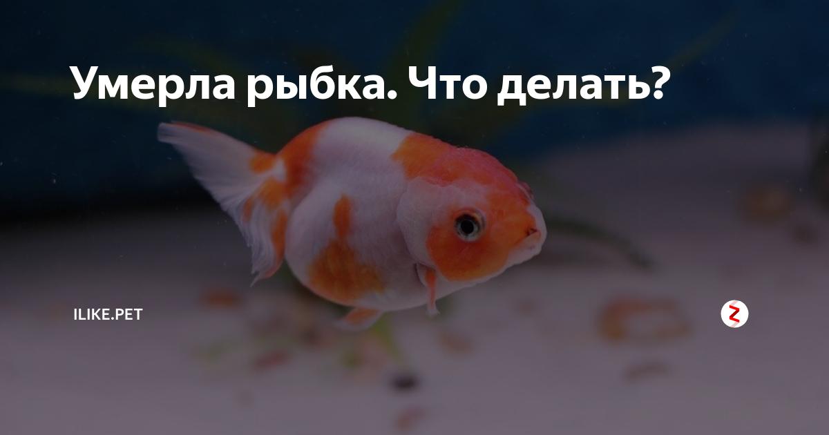 Факторы риска: почему умирают рыбки в аквариуме и как предотвратить их гибель?