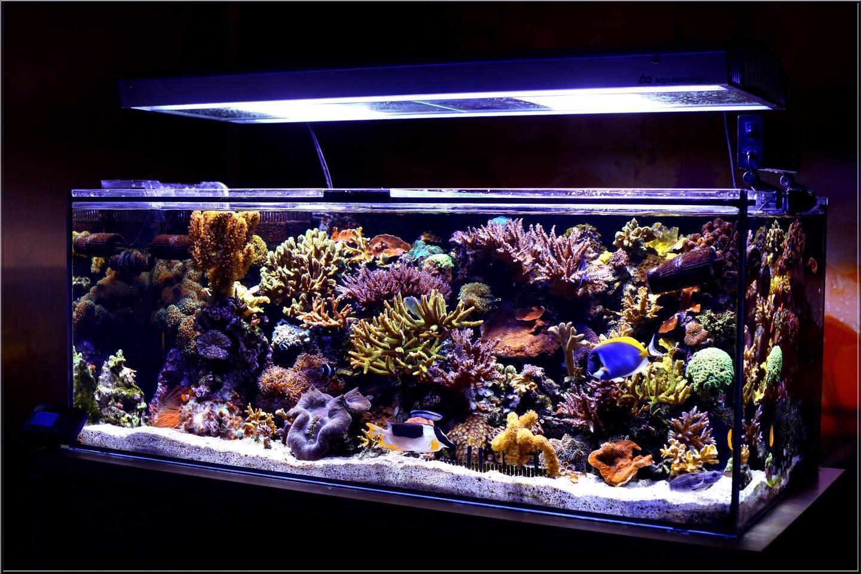 Лампы для роста растений в аквариуме: виды и критерии выбора