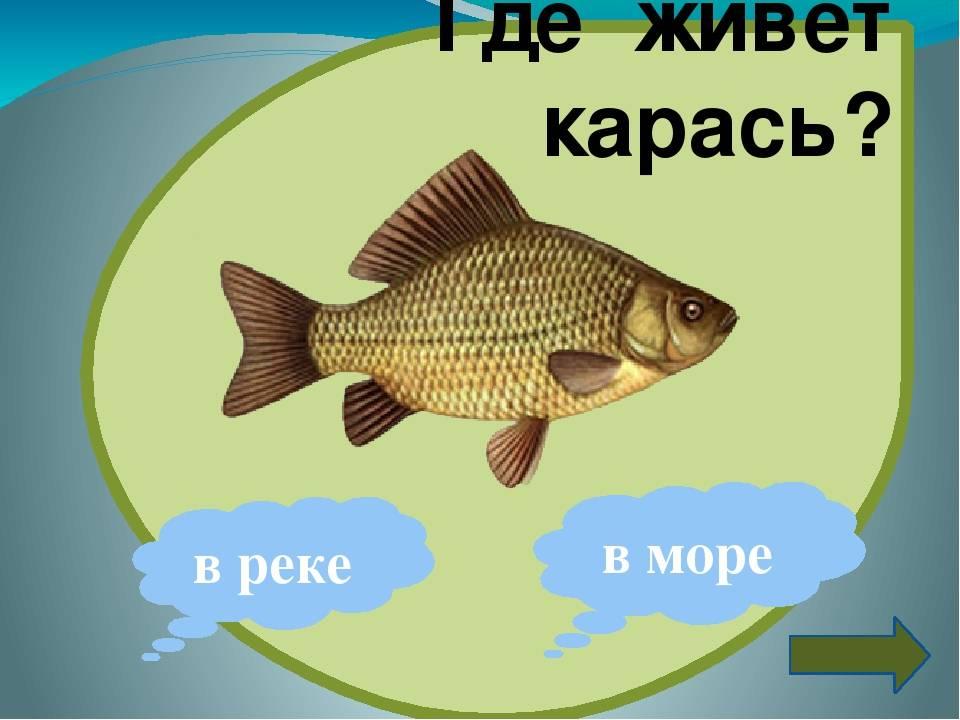 Морской карась (ласкирь): описание рыбы и особенности ловли