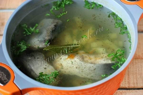 Уха из толстолобика - рецепт с пошаговыми фото