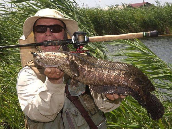 Ловля змееголова в апреле - читайте на сatcher.fish