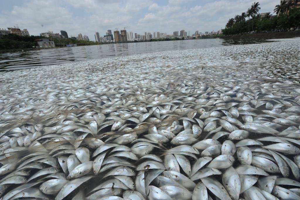 Сонник рыба в руках мертвая. к чему снится рыба в руках мертвая видеть во сне - сонник дома солнца