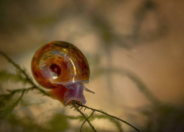 Как избавиться от улиток в аквариуме? 14 фото как вывести их без вреда для рыбок? ловушка своими руками. как бороться с мелкими улитками?