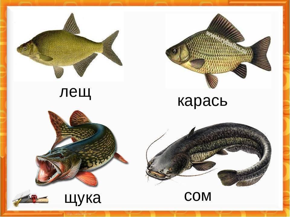 Рыбалка в июне. как и на что ловить рыбу в начале лета