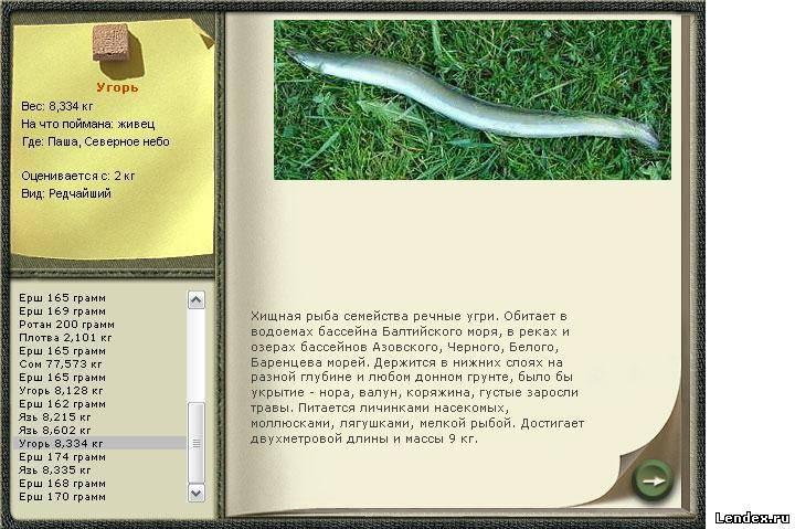 Ловля угря: где водится и нерестится эта рыба или змея, как поймать