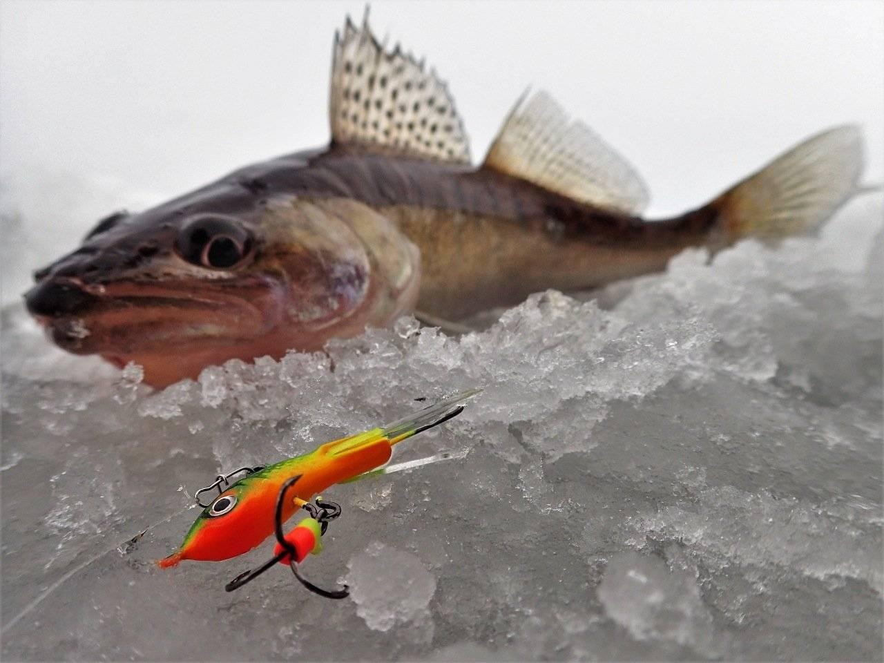 Ловля окуня на балансир зимой: (техника ловли, топ балансиров)