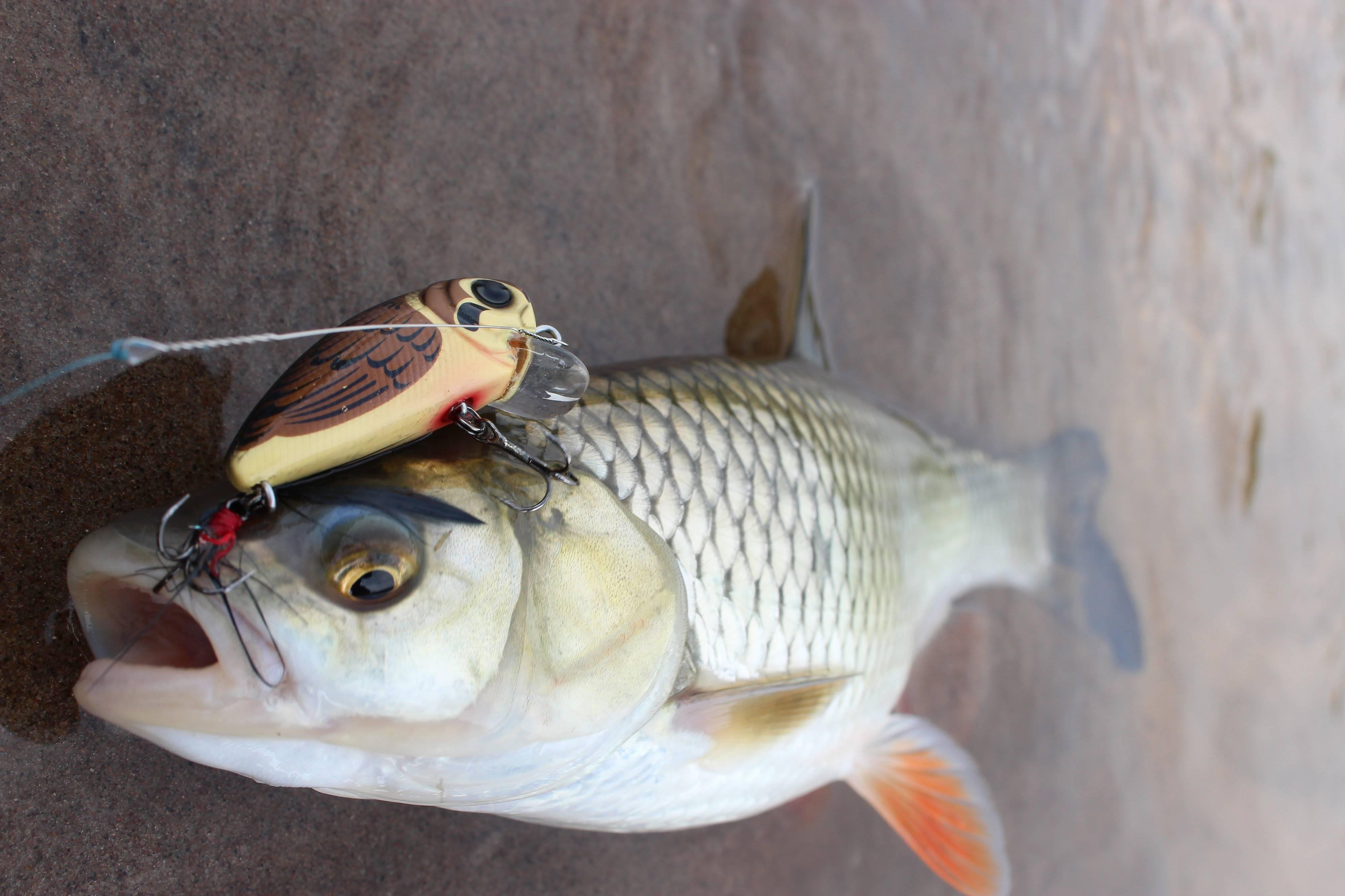 Уловистые приманки для ловли щуки на спиннинг – виды, характеристики, правильное использование