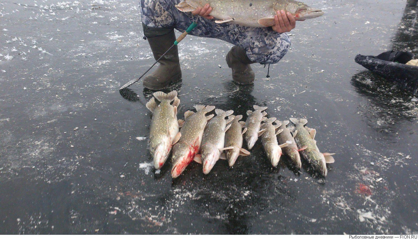 ✅ рыбалка в клину бесплатно - danafish.ru