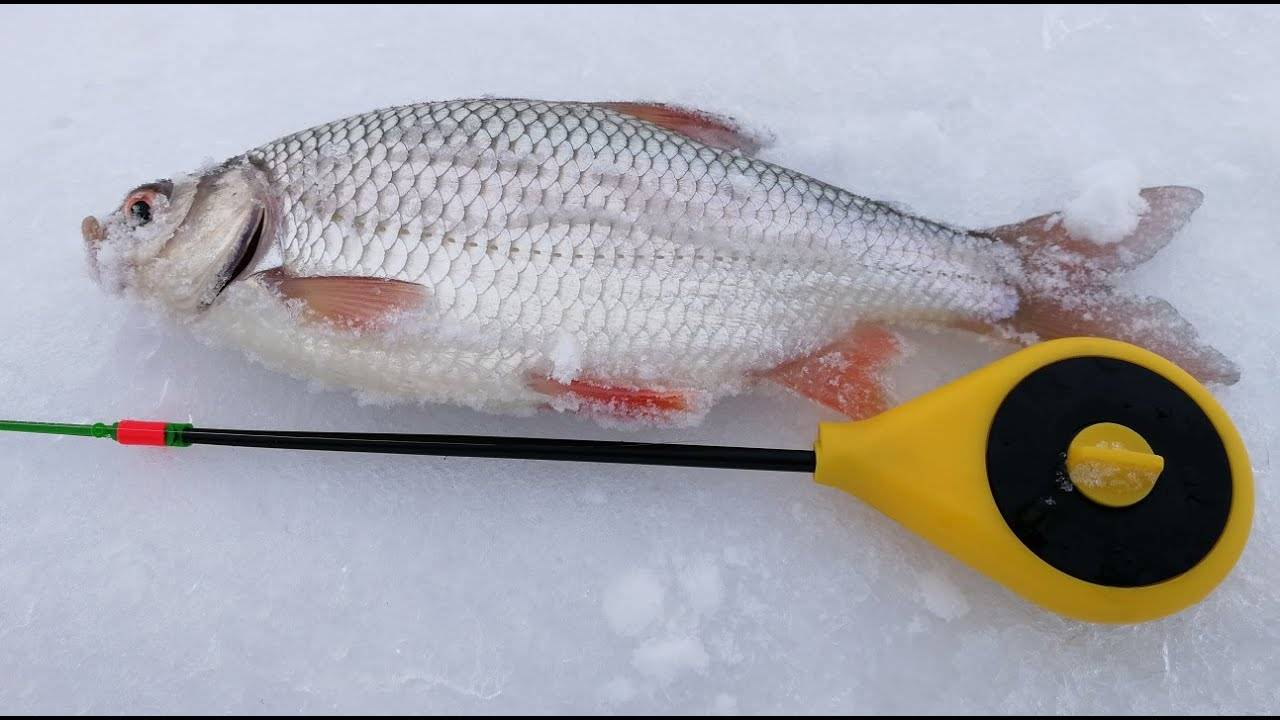 Ловля на безмотылку зимой различной рыбы, секреты игры
