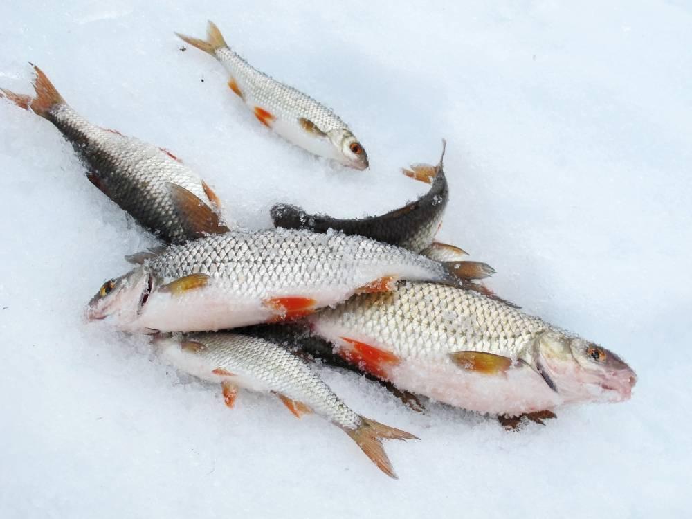 Встреча с инспектором рыбоохраны в нерест: только с берега и только на поплавок или донку