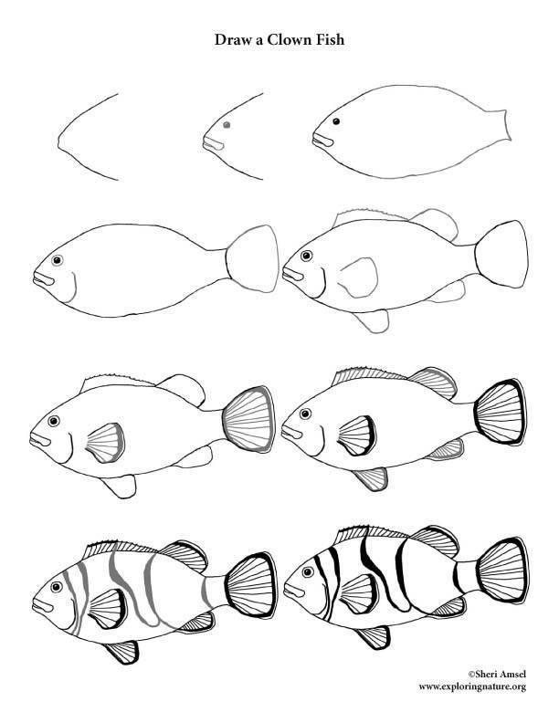 Как нарисовать рыбу карандашом поэтапно для детей