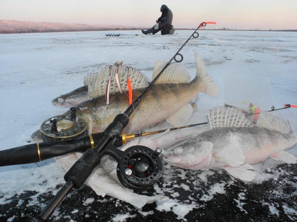 Ловля судака зимой на блесну. Ловля судака на жерлицы зимой