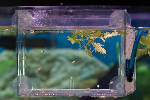Топ-9 лучших живых кормов для аквариумных рыбок