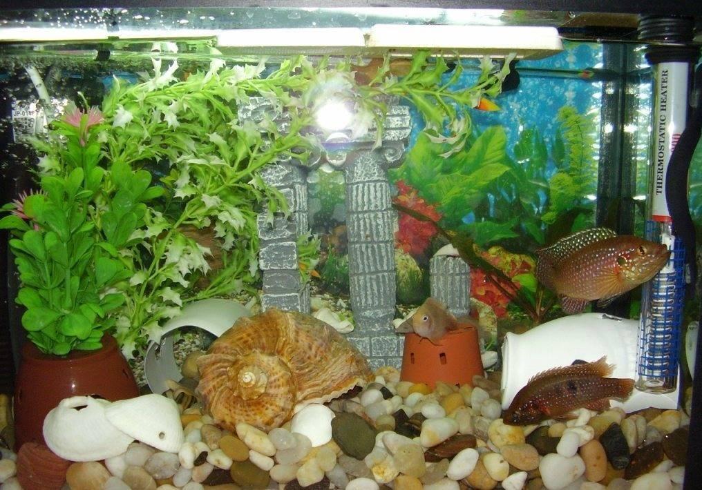 Все о донном фильтре: чистый аквариум без лишнего оборудования