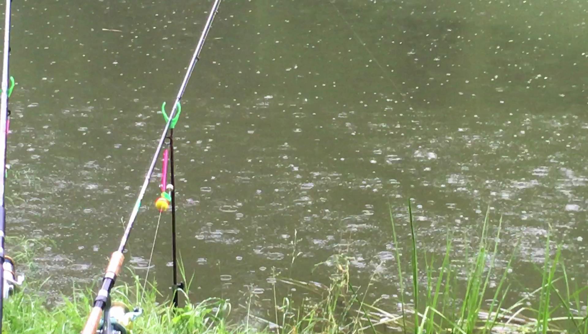 В какую погоду лучше ловить щуку, клюет ли рыба в дождь (летом, осенью)