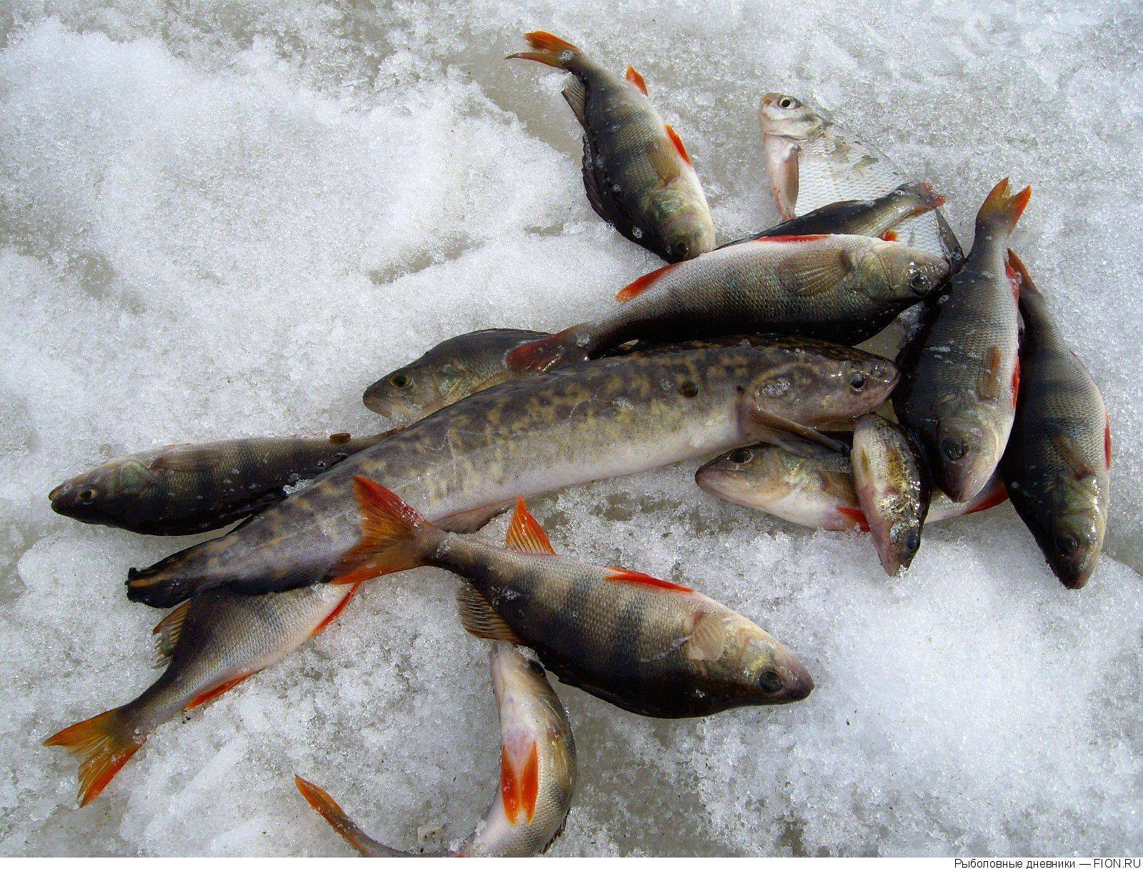 Места для рыбалки в свердловской области