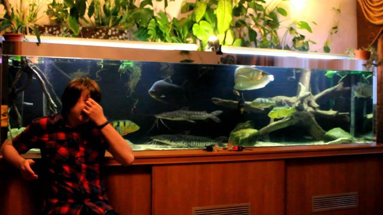 Рыба-лиса (черноморская): как приготовить, фото, особенности рыбалки