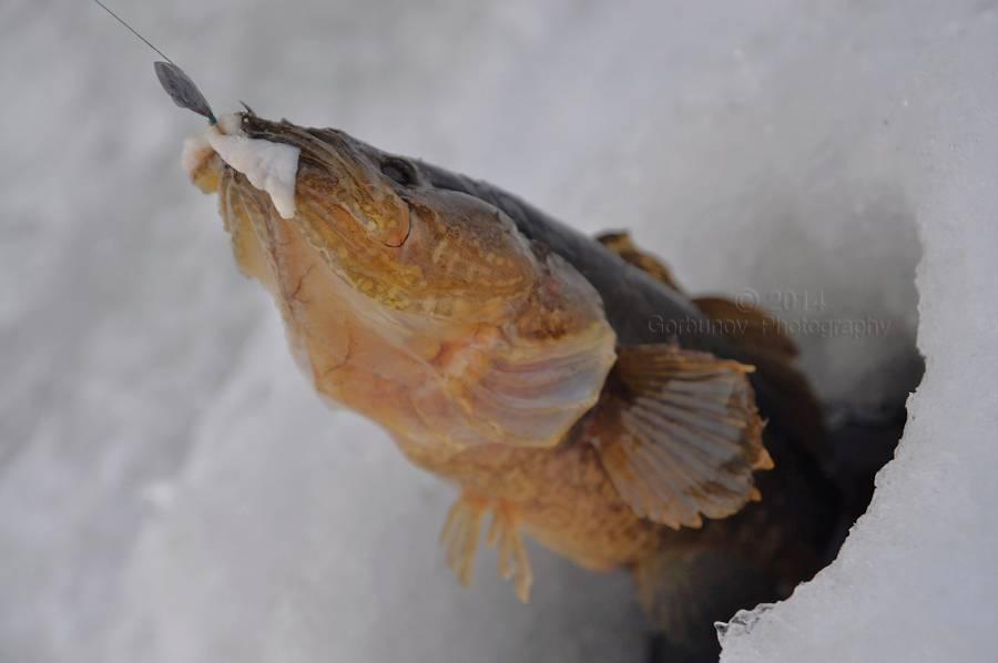 Мормышка на ротана зимой - исчерпывающий гайд по выбору !
