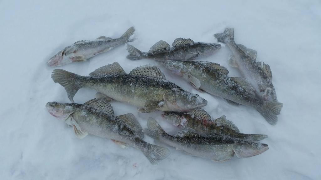 Рыбалка ранней весной. летняя снасть у кромки льда. - полезные советы - каталог статей - клевое место. все о рыбалке.