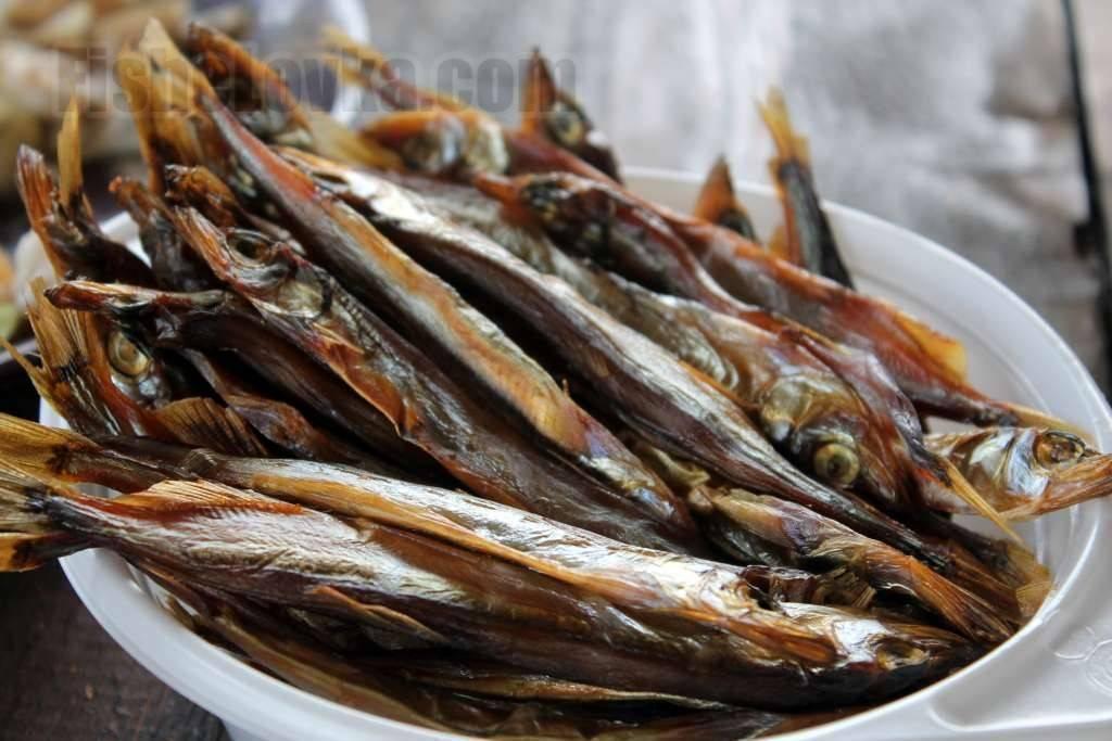 Рыба корюшка: подвиды, польза и вред, интересные факты и среда обитания этой рыбки
