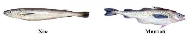 Рыба треска, где обитает и как выглядит эта ценная рыба?