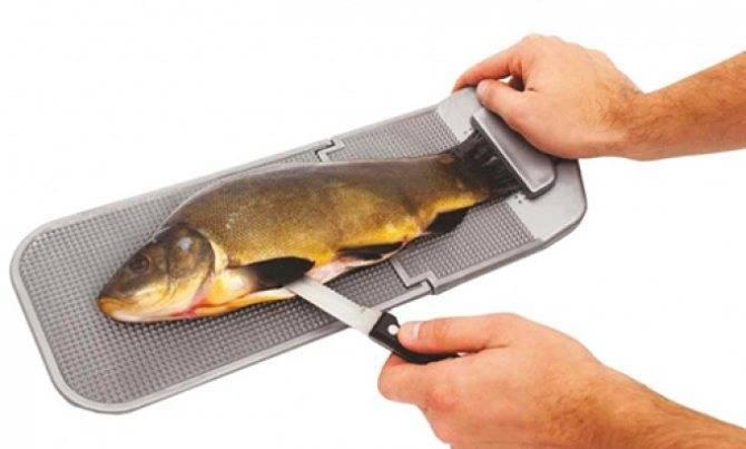 Как легко почистить от чешуи окуня, речного или морского, и быстро его разделать