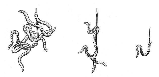 Как насадить червя на крючок - способы правильного насаживания