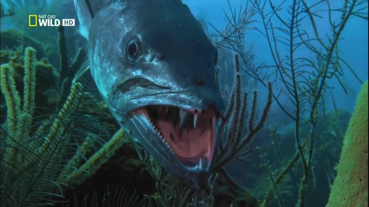 Список самых крупных хищников нашей планеты