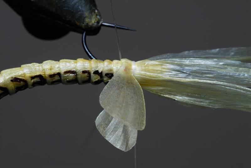 Пресноводный ручейник: описание и фото насекомого