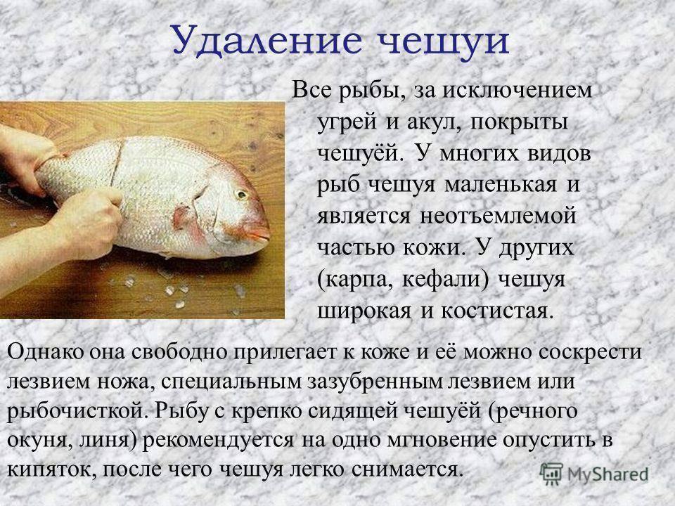 Ихтиоз кожи: причины появления рыбьей чешуи на теле человека, методы лечения болезни