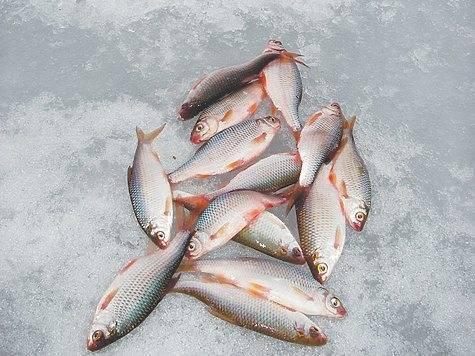 Подбор снастей и выбора эффективной тактики для рыбалки в глухозимье - читайте на сatcher.fish