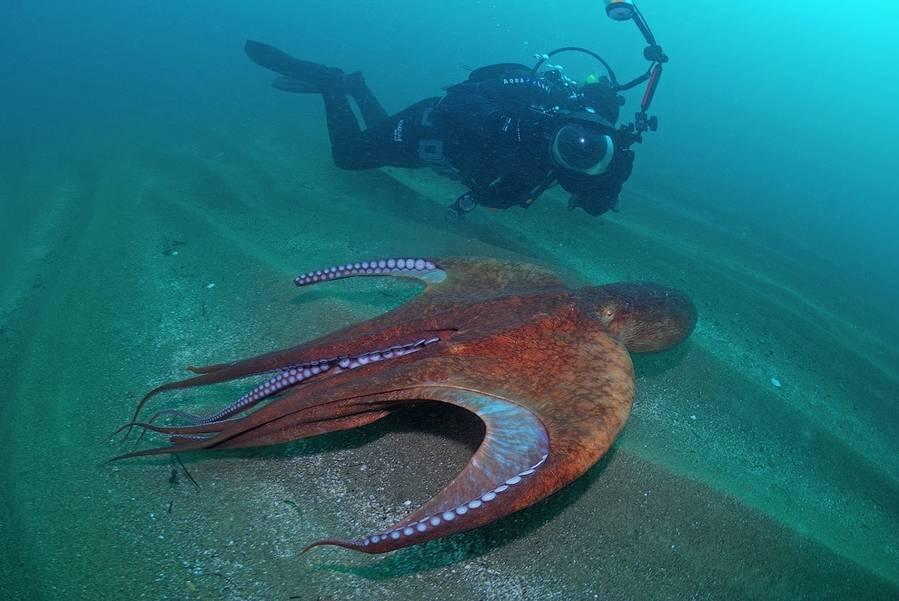 Какая рыба самая большая в мире - other