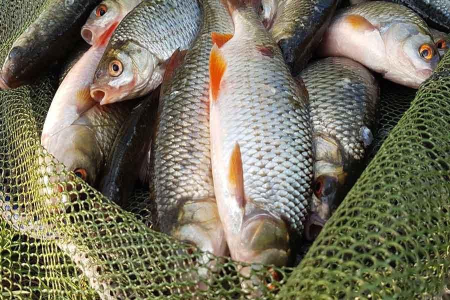 Самодельная прикормка для плотвы своими руками: рецепты для ловли летом, зимой, весной и осенью