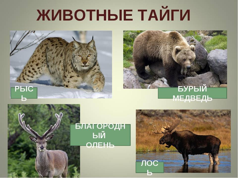 Природные зоны россии: виды, названия, карта, климат, описание, почвы, характеристика, животные, растения, фото и видео - «как и почему»