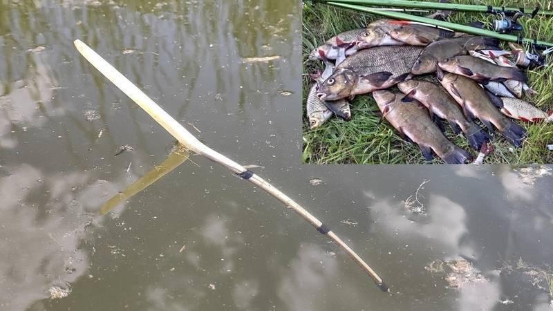 Рыбалка на реке: о рыбах речных и способах их ловли
