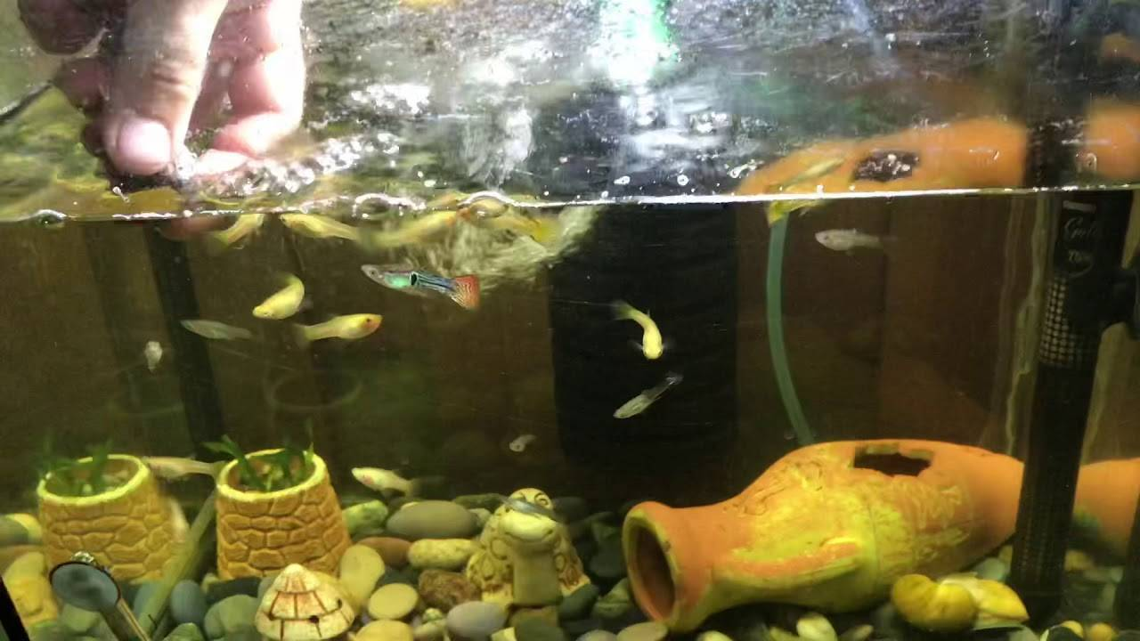 Рекомендации по кормлению аквариумных рыбок