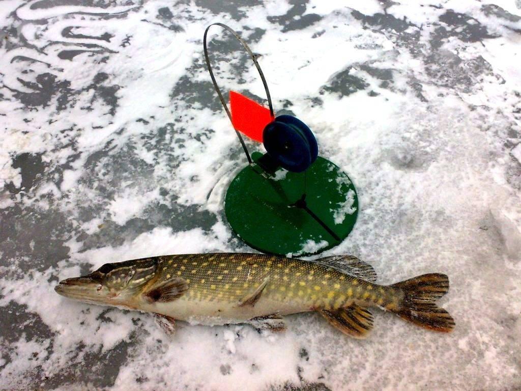 Как ловить щуку на жерлицы зимой: оснастка, техника и тактика ловли