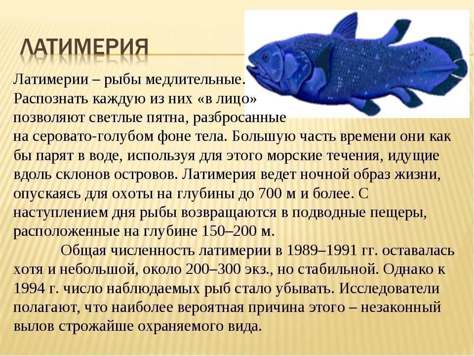 Рыба латимерия