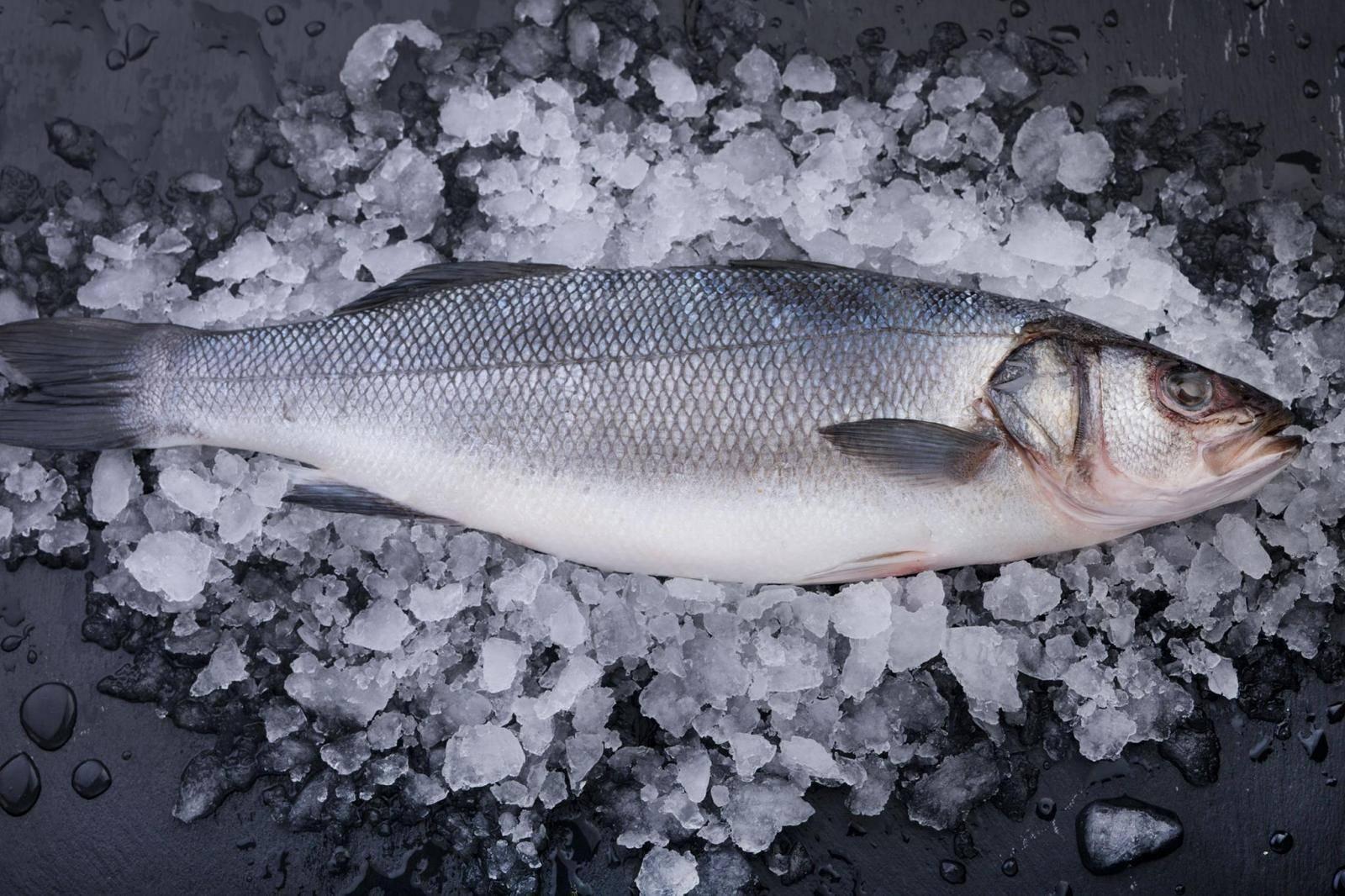 Виды рыбы морской волк и его польза для человека