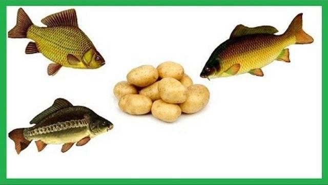 Тесто для рыбалки, как приготовить тесто в наживку для ловли рыбы