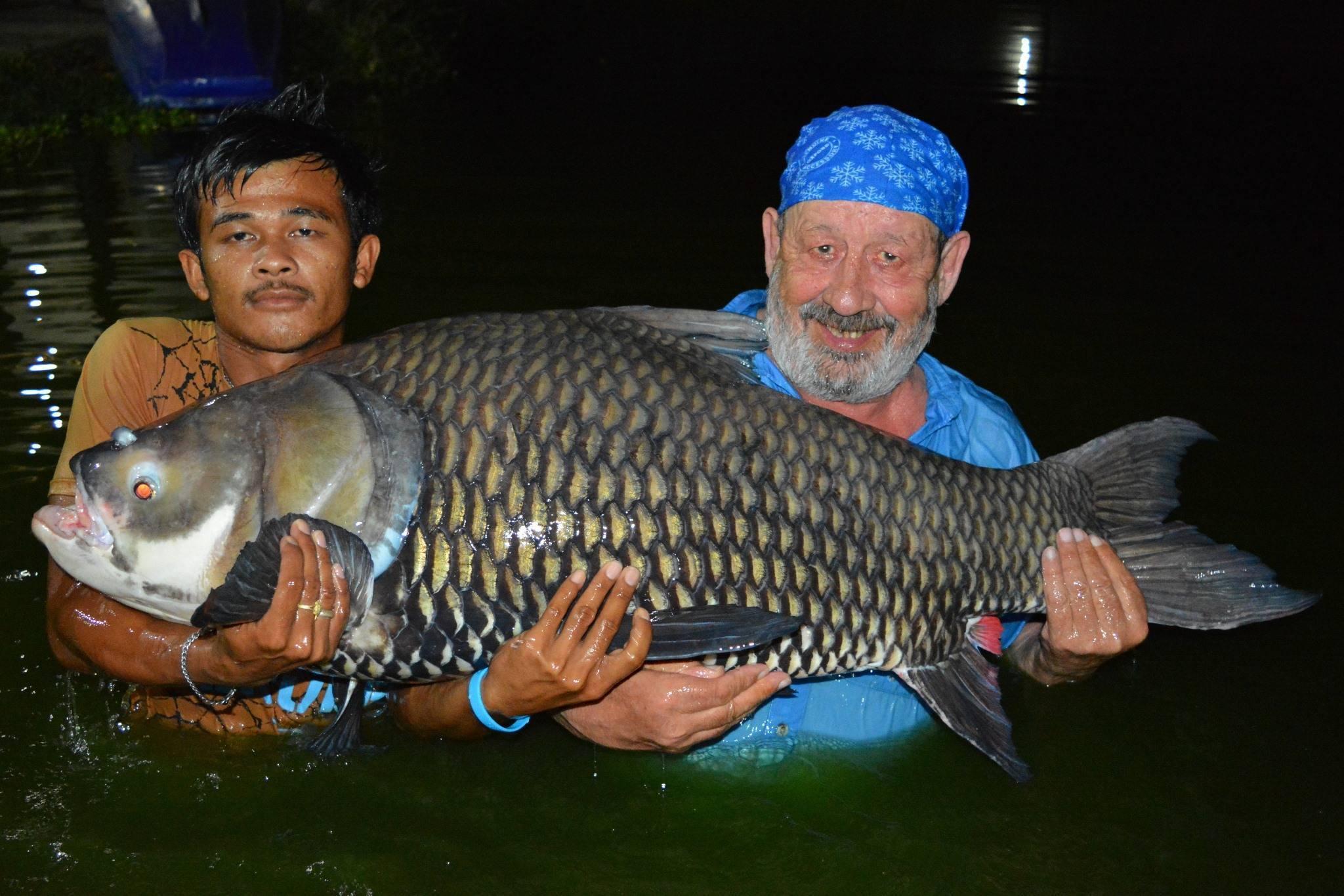 Польза и вред налима - 90 фото рыбы и особенности ее применения в рационе питания