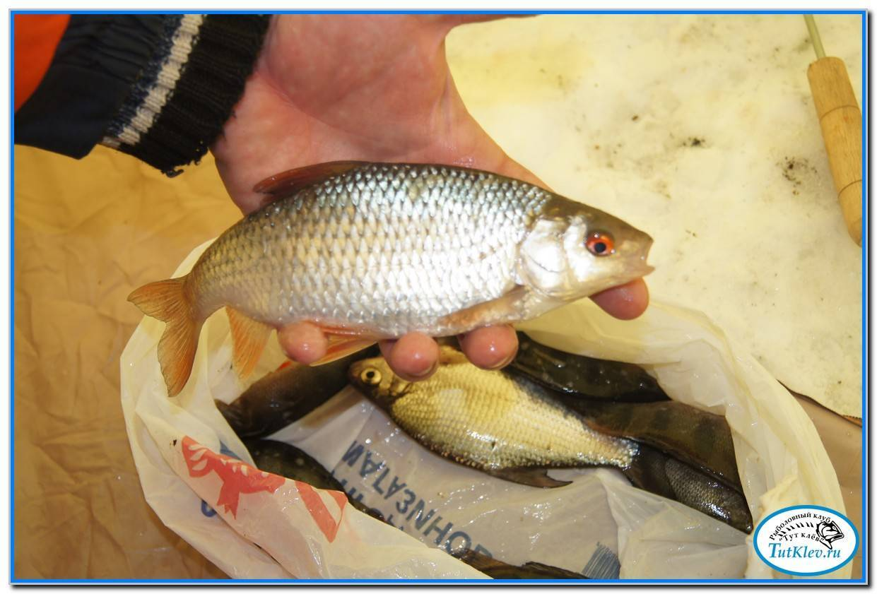 ᐉ старооскольское водохранилище - место для рыбака - ✅ ribalka-snasti.ru