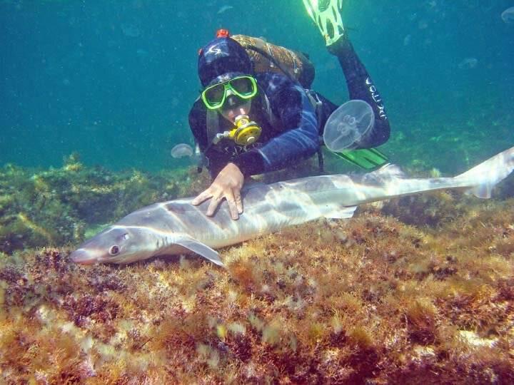 Водятся ли акулы в черном море? опасные виды у крыма